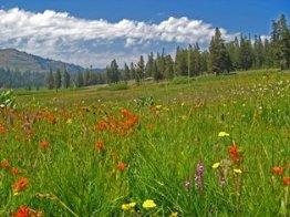Paige Meadows Tahoe City - Lake Tahoe Hiking Trails Ward Canyon