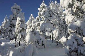 Lake Tahoe Winter Weather Advisory