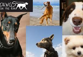 "Lake Tahoe's Canine Community Carnival, ""Dawgs on the Run"""