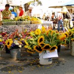 Produce at the South Lake Tahoe Summer Farmers Market