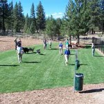 Lake Tahoe Dog Parks and Dog Beaches – Pet Friendly Lake Tahoe Lodging